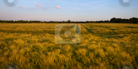 Rural summer farmland stock photo, Farmland almost ready for the harvest with blue sky by Karin Claus