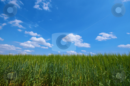 Rural stock photo, Green rural farmland with blue sky and clouds by Karin Claus