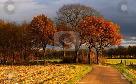 Colorful autumn road  stock photo, country road to some nice colored autumn trees  with dark clouds in a rural environment by Karin Claus