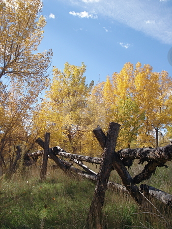 Fall Foliage in Colorado stock photo, A fall day in Colorado with the leaves changing colors and an old wooden fance in a green field. by Ben O'Neal