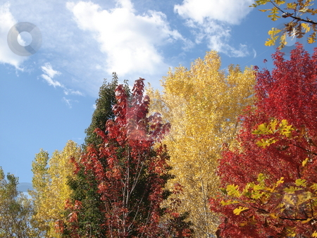 Foliage in Autumn stock photo, Trees changing color in fall in Colorado. by Ben O'Neal