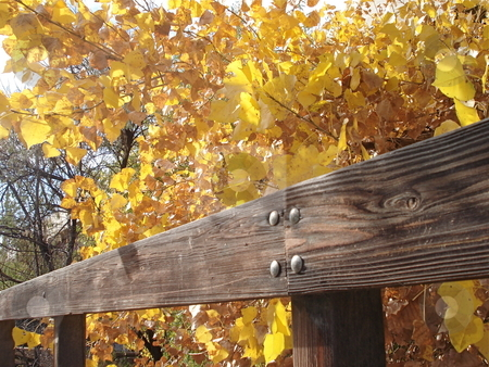 Bridge and Aspens stock photo, Trees changing color near an old wooden bridge in Denver, Colorado in the Fall. by Ben O'Neal