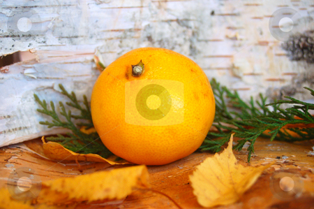 Orange Mandarin stock photo, A orange mandarin in christmas decoration by Lars Kastilan