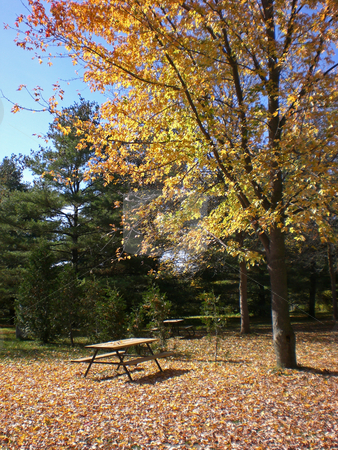 Picnic table under autumn tree stock photo,  by J.G. Byers