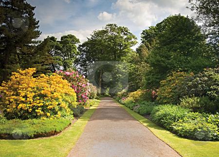 Garden Path stock photo, A path through a glorious garden by Norma Cornes