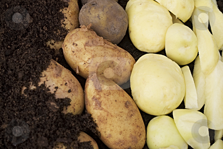 Potatos (potatoes) stock photo, Starting in the soil and ending sliced for cooking, a lot of potatoes by Norma Cornes