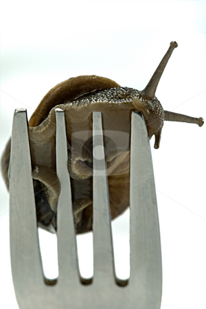 Snail dinner stock photo, A snail crawling on the end of a fork by Norma Cornes