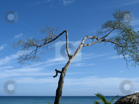 Small tree by the blue ocean stock photo, Small tree by the blue ocean by Mbudley Mbudley