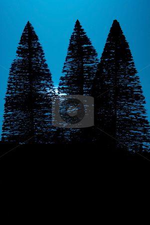 Moon Light Pine Trees stock photo, Pine trees illuminated by the light of the moon. by Robert Byron