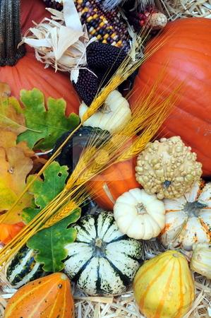 Autumn Harvest stock photo, Autumn harvest of pumpkins, Squash and gourds by Lynn Bendickson