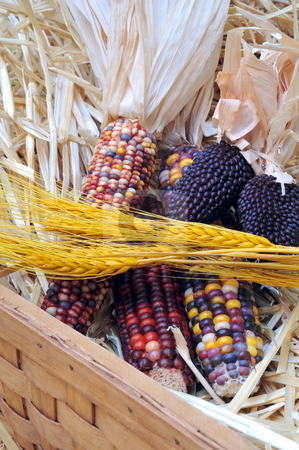 Basket oF Indian Corn And Wheat stock photo, Indian Corn and Wheat in a basket with straw in the background by Lynn Bendickson