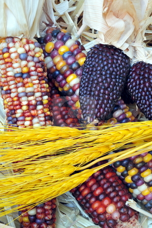Indian Corn And Wheat stock photo, Indian Corn and Wheat with straw in the background by Lynn Bendickson