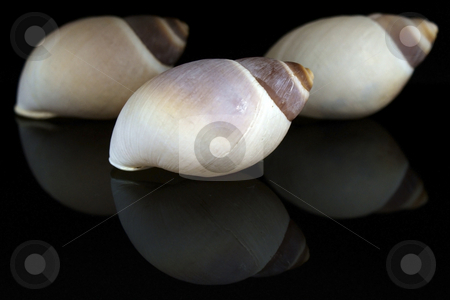 Three Seashell stock photo, Three Seashell by JEFERSON PEDROSA