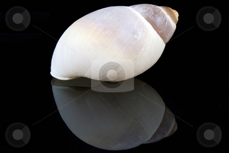Seashell stock photo, Seashell by JEFERSON PEDROSA