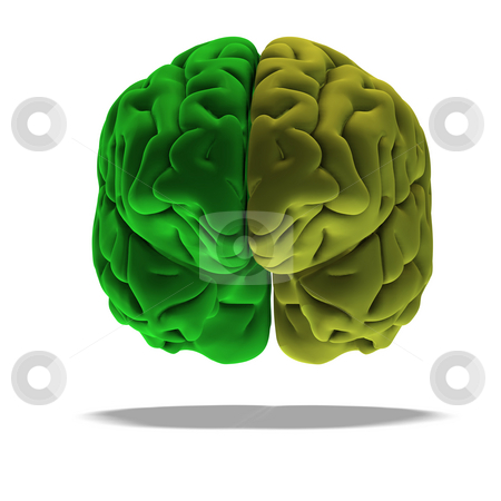 Green brain stock photo, Dramatical render of a human brain in green with clipping path by Ralf Kraft