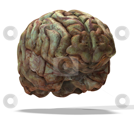Older human brain stock photo, Rendering of a human brain which look used with clipping path by Ralf Kraft