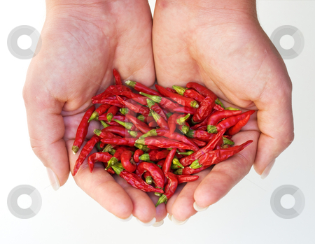 Hot chili harvest stock photo, Metaphor about small but hot harvest of chili peppers. by Sinisa Botas