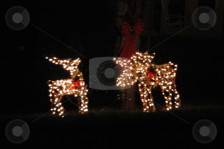 Outdoor Christmas Decorations stock photo, Outdoor Christmas Decorations of reindeer are lit for night viewing. by Janie Mertz