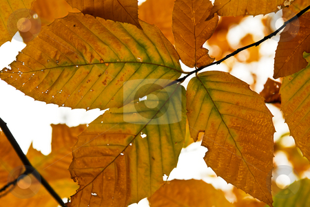 Autumn leaves stock photo, Autumn leaves of bright fall colors close up by Elena Elisseeva