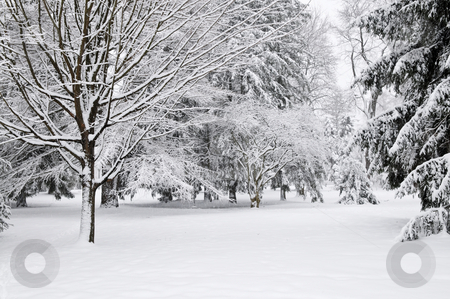 Winter park stock photo, Winter park landscape with snow covered trees by Elena Elisseeva