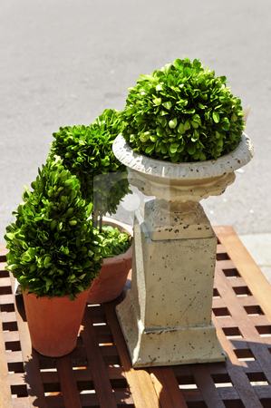 Potted green plants stock photo, Potted green plants on wooden patio table by Elena Elisseeva