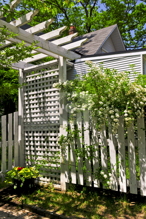 White trellis in a garden stock photo, White trellis and fence with flowering bridal wreath shrub in a garden by Elena Elisseeva