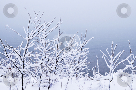 Snowy trees stock photo, Winter trees covered with fresh snow - natural background by Elena Elisseeva