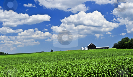 Rural landscape stock photo, Panoramic rural summer landscape with green corn field and a farm by Elena Elisseeva