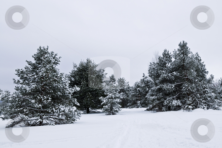 Winter landscape stock photo, Winter landscape with snow covered trees and gray sky by Elena Elisseeva