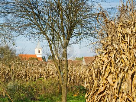Panonian village stock photo, Autumn in panonian village somewhere in Croatia. by Sinisa Botas