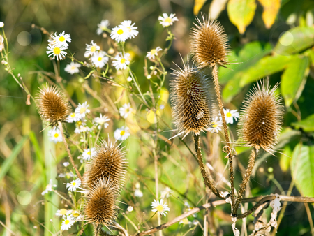 Thistle stock photo, Various wild plants in nature with first sight on thistle. by Sinisa Botas
