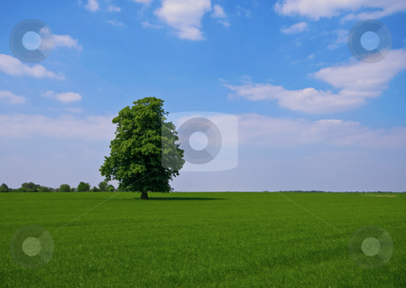 Green pature with tree stock photo, Green pasture with lone standing tree by Karin Claus