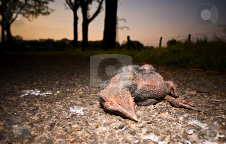 Dead bird stock photo, Young dead  bird on the pavement by Karin Claus