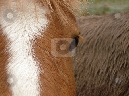 Brown Horse stock photo, A brown horse stands in front of a gray donkey. by Ben O'Neal