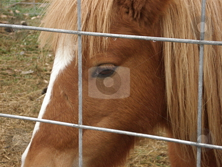 Little Brown Horse stock photo, A little brown horse looks out from it's enclosure at the passersby. by Ben O'Neal