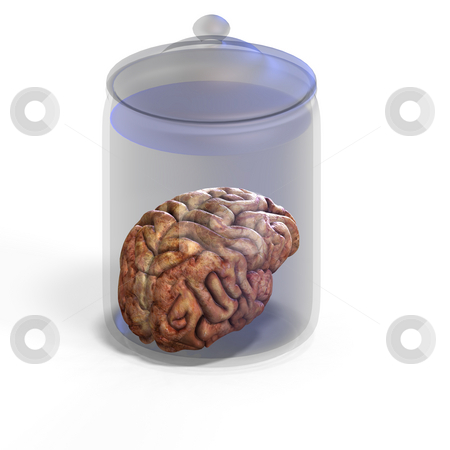 Human brain stock photo, 3d render of a human brain laying in a jay with clipping path by Ralf Kraft