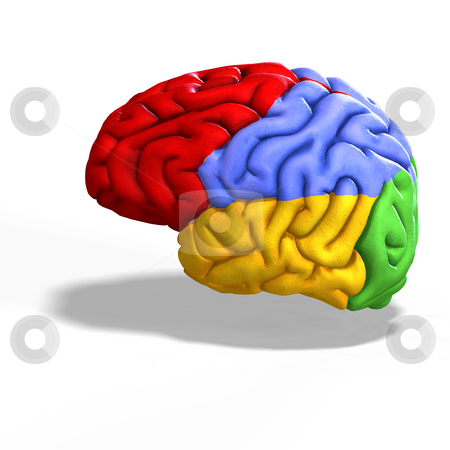 Colored brain stock photo, Schematic illustration of a human brain with clipping path by Ralf Kraft
