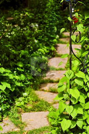 Vine on wrought iron arbor stock photo, Closeup on green yam vine climbing on wrought iron arbor by Elena Elisseeva