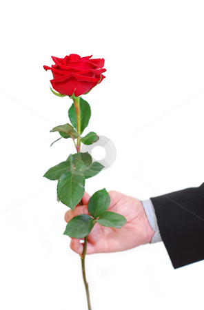 Man red rose stock photo, Man's hand holding a red rose on white background by Elena Elisseeva