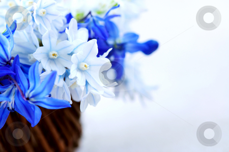 First spring flowers stock photo, Blue bouquet of first spring flowers in a basket - floral background by Elena Elisseeva