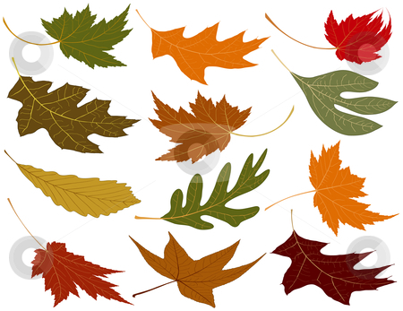 Wind blown fall leaves stock vector clipart, Wind blown fall leaves to add to your designs by Adrian Sawvel