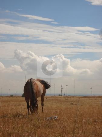 Vertical Horse Grazing stock photo, A horse grazes in a Colorado field. by Ben O'Neal