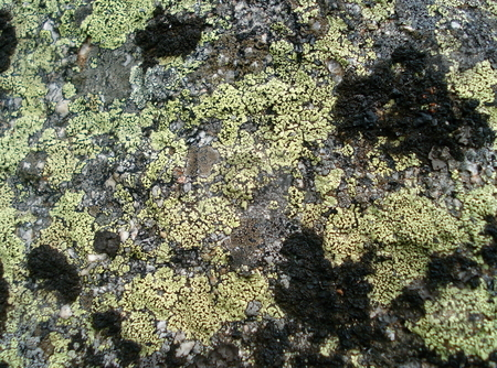 Lichen and Moss on a Rock stock photo, Moss and lichen cover a large granite rock in Colorado. by Ben O'Neal