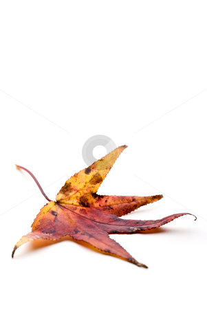 Autumn Leaf stock photo, Autumn Leaf by Vince Clements