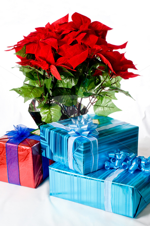 Christmas presents and Poinsettia stock photo, Christmas presents placed in front of a Poinsettia plant. by RCarner Photography