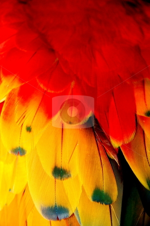 PARROT FEATHERS stock photo, PARROT FEATHERS by Johnny Roberts