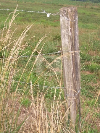 Fence Post Holding Three Strands of Barbed Wire stock photo, Wooden fence post holds three strands of barbed wire with meadow in background by Krystal McCammon