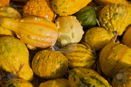 Fall gourds stock photo, Squash gourds piled together on hay by Mitch Aunger