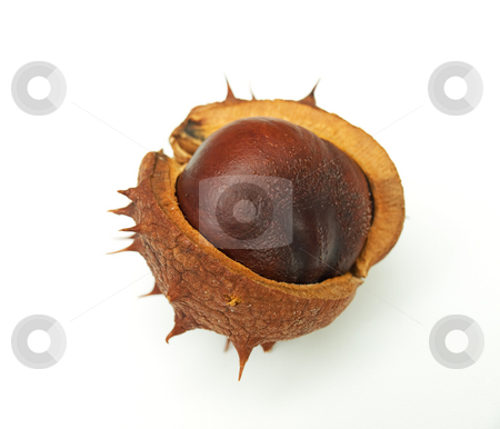 Chestnut stock photo, Chestnut is still in the shell by Sinisa Botas