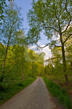 Forest road stock photo, County road through a nice bright forest by Karin Claus